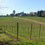 oregon_vineyards